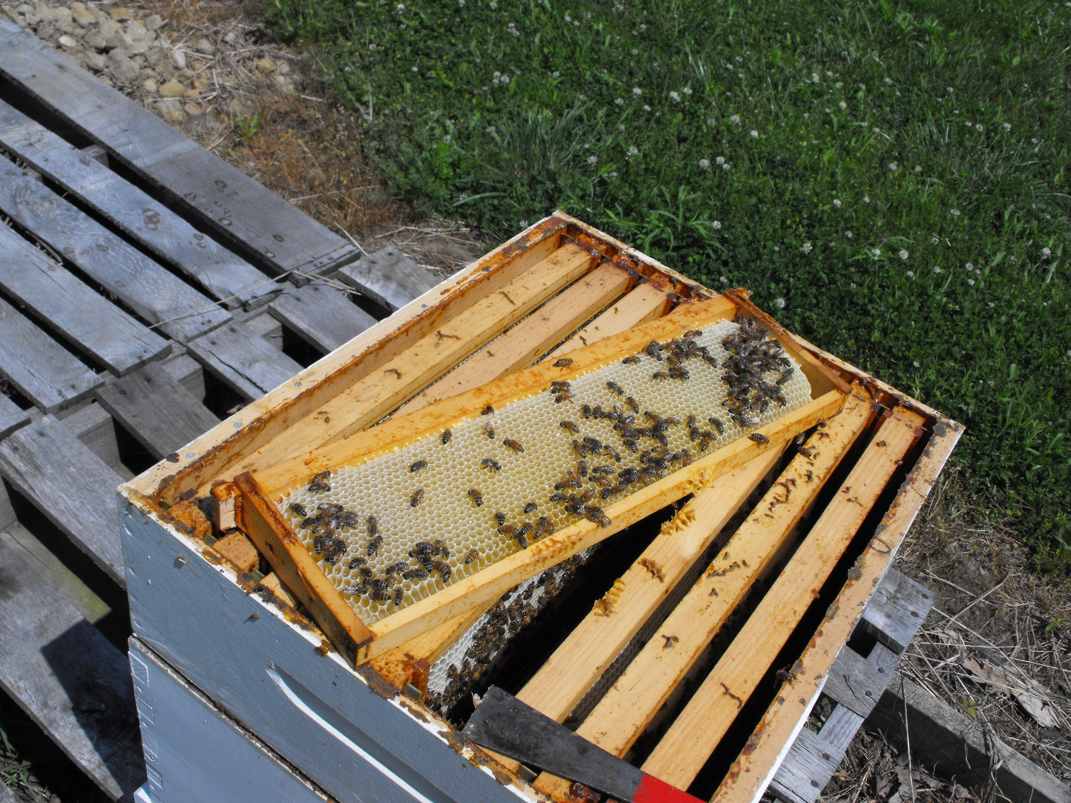 What is a bee comb?What is it made of? How is it used?